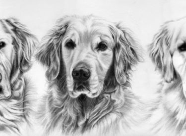 Murphy, Kendzie and Boomer – Pencil
