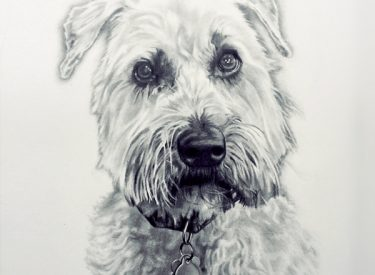 Brodie – Graphite Pencil